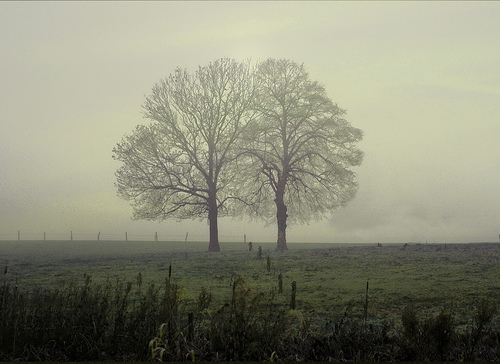 フリー画像| 自然風景| 樹木の風景| 霧/靄| 暗雲の風景|