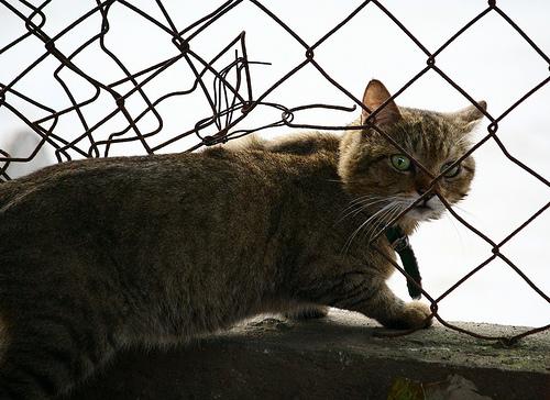 フリー画像| 動物写真| 哺乳類| ネコ科| 猫/ネコ| キジトラ|