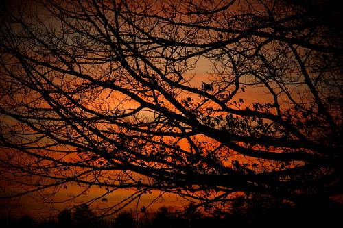 フリー画像| 自然風景| 樹木の風景| 夕日/夕焼け/夕暮れ| 橙色/オレンジ|