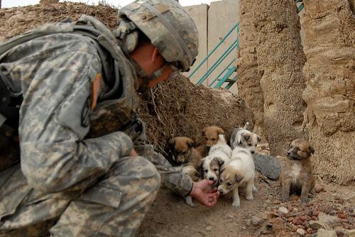 フリー画像| 戦争写真| 兵士/ソルジャー| 人物写真| アメリカ軍兵士| 犬/イヌ| 子犬| イラク風景|