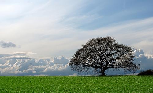 フリー画像| 自然風景| 樹木の風景| 雲の風景| 平原の風景| ベルギー風景|