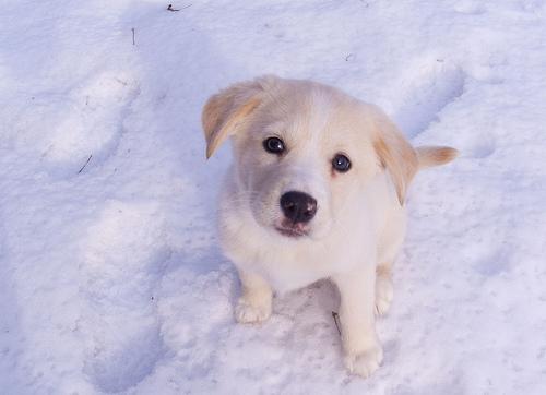 フリー画像| 動物写真| 哺乳類| イヌ科| 犬/イヌ| 子犬|