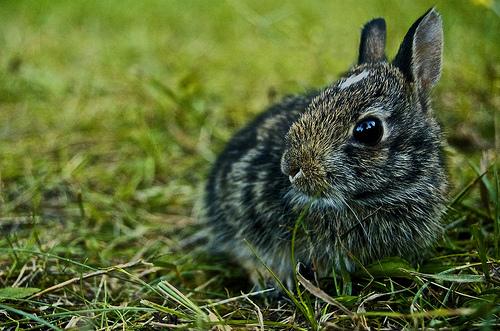 フリー画像| 動物写真| 哺乳類| 小動物| 兎/ウサギ|