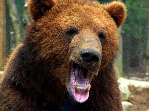 フリー画像| 動物写真| 哺乳類| 熊/クマ|