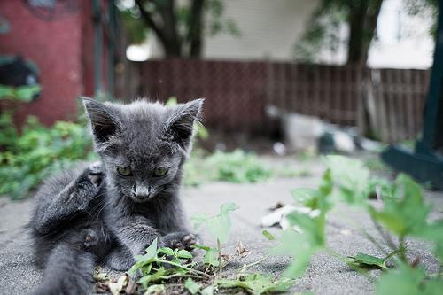 フリー画像| 動物写真| 哺乳類| ネコ科| 猫/ネコ| 子猫|