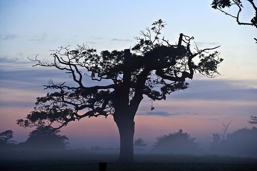 フリー画像| 自然風景| 樹木の風景| 霧/靄| イギリス風景|