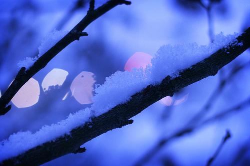 フリー画像| 自然風景| 雪景色| 樹木の風景| 青色/ブルー| 枝|