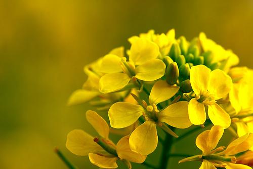 フリー画像| 花/フラワー| 黄色/イエロー|