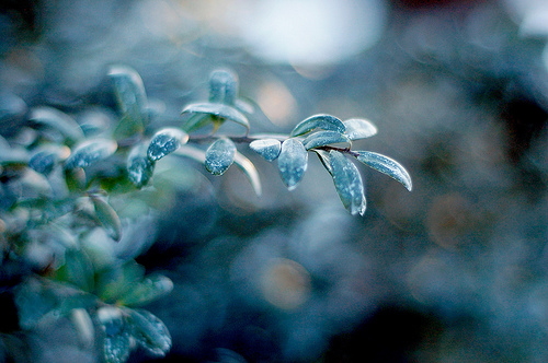 フリー画像| 葉っぱ| 霜| 緑色/グリーン|