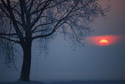 フリー画像| 自然風景| 朝日/朝焼け| 樹木の風景| 霧/靄| イタリア風景|
