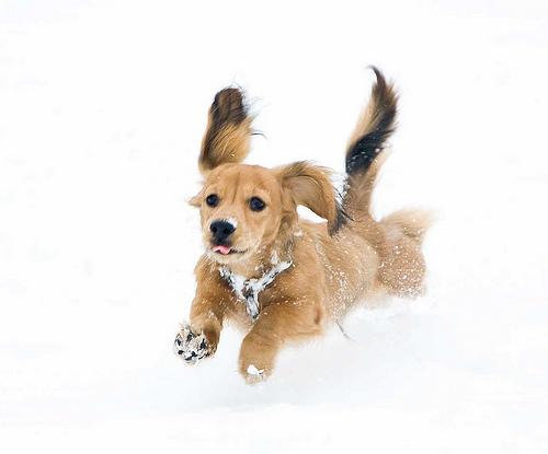 フリー画像| 動物写真| 哺乳類| イヌ科| 犬/イヌ| ミニチュアダックスフンド|