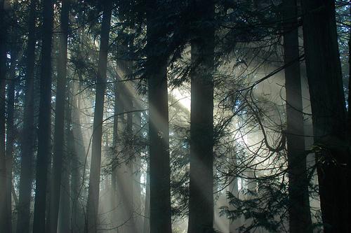 フリー画像| 自然風景| 森林/山林| 樹木の風景| 太陽光線| 木漏れ日|      フリー素材|