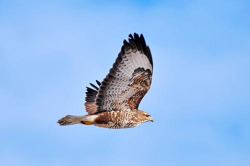 フリー画像| 動物写真| 鳥類| 猛禽類| 鷹/タカ|       フリー素材|