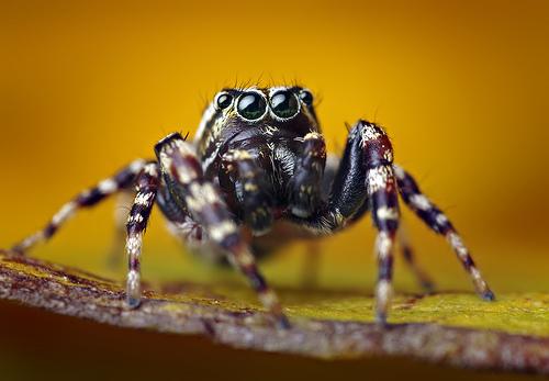 フリー画像| 節足動物| 蜘蛛/クモ|         フリー素材|