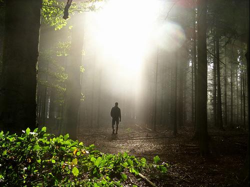 フリー画像|人物写真|一般ポートレイト|後ろ姿|森林/山林|木漏れ日|フリー素材|