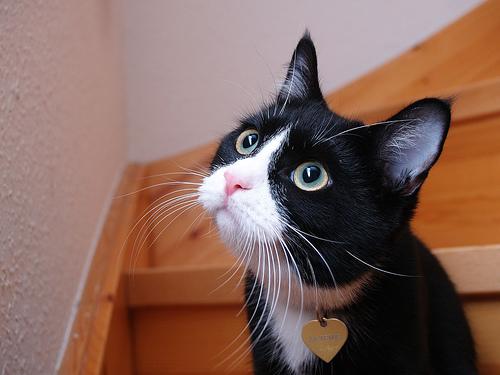 フリー画像  動物写真  哺乳類  ネコ科  猫/ネコ        フリー素材 