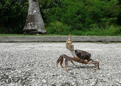 フリー画像| 節足動物| 甲殻類| 蟹/カニ| ピース|       フリー素材|