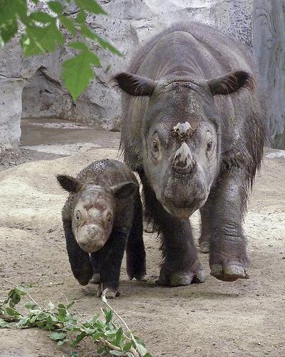 フリー画像| 動物写真| 哺乳類| 犀/サイ| 親子/家族|       フリー素材|