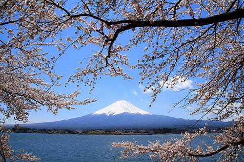 フリー画像| 自然風景| 山の風景| 富士山| 桜/サクラ| 日本風景|      フリー素材|