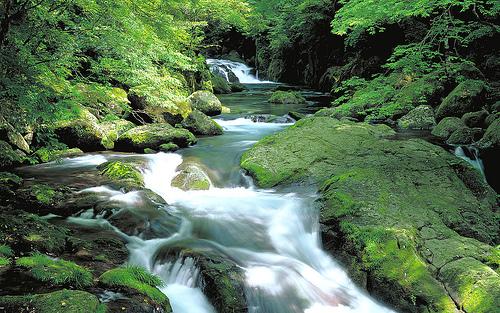 フリー画像| 自然風景| 河川の風景| 森林/山林| 緑色/グリーン| 日本風景|      フリー素材|