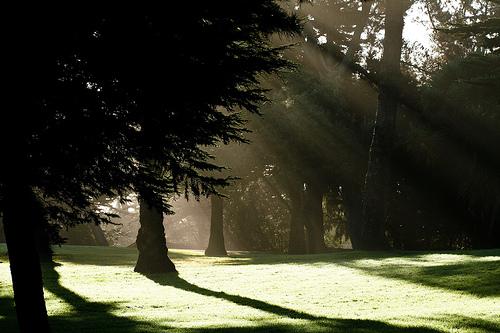 フリー画像| 自然風景| 樹木の風景| 木漏れ日| 太陽光線| 緑色/グリーン| 森林/山林|