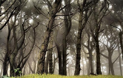 フリー画像| 自然風景| 森林/山林| 樹木の風景| 霧/靄|