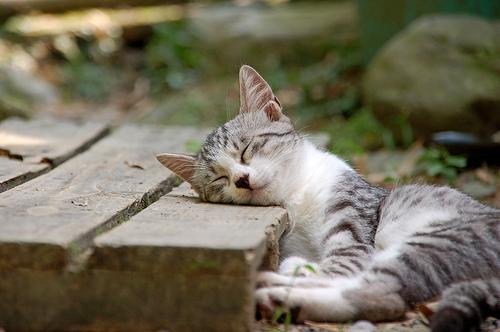 フリー画像| 動物写真| 哺乳類| ネコ科| 猫/ネコ| 子猫| 寝顔/寝相/寝姿|     フリー素材|
