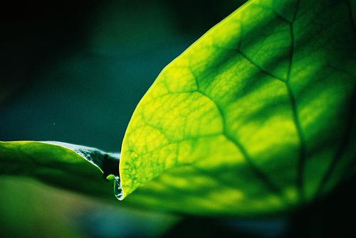フリー画像| 植物| 葉っぱ| 緑色/グリーン|