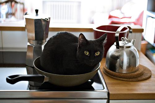 フリー画像| 動物写真| 哺乳類| ネコ科| 猫/ネコ| 黒猫|      フリー素材|