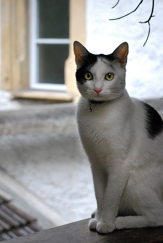 フリー画像|動物写真|哺乳類|ネコ科|猫/ネコ|