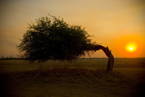 フリー画像  自然風景  樹木の風景  夕日/夕焼け/夕暮れ  アルゼンチン風景 