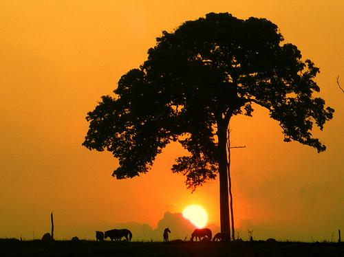 フリー画像| 自然風景| 夕日/夕焼け/夕暮れ| 樹木の風景| シルエット| 橙色/オレンジ|