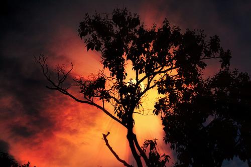 フリー画像| 自然風景| 空の風景| 樹木の風景| シルエット| 橙色/オレンジ| 夕日/夕焼け/夕暮れ|