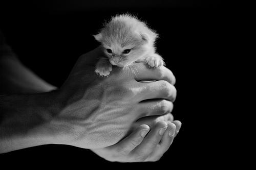 フリー画像| 動物写真| 哺乳類| ネコ科| 猫/ネコ| 子猫| モノクロ写真| 赤ちゃん/動物|