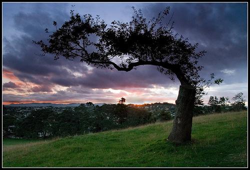 フリー画像| 自然風景| 樹木の風景| 夕日/夕焼け/夕暮れ| 暗雲の風景|
