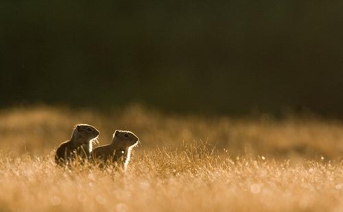 フリー画像| 動物写真| 哺乳類| リス科| 小動物| リス| 恋人/カップル|