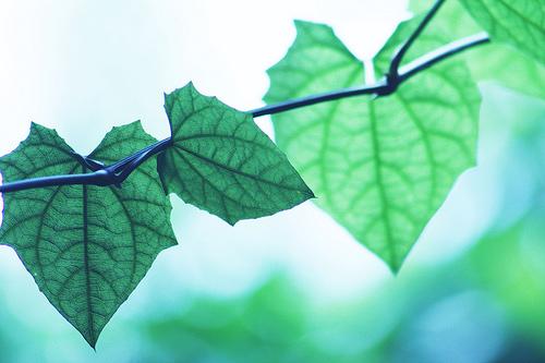 フリー画像| 植物| 葉っぱ| 緑色/グリーン| ハート|