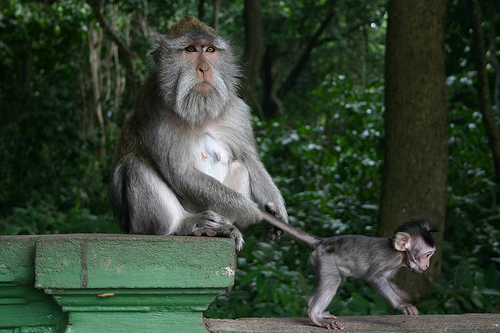 フリー画像| 動物写真| 哺乳類| 猿/サル| 親子/家族| 子猿|