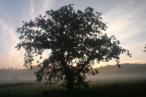 フリー画像| 自然風景| 樹木の風景| 霧/靄| ドイツ風景|