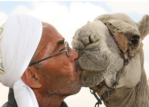 フリー画像| 動物写真| 哺乳類| ラクダ| 人物写真| キス/KISS|