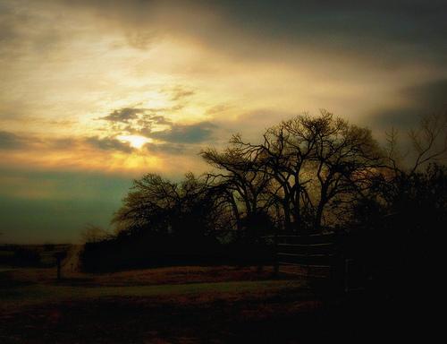 フリー画像| 自然風景| 樹木の風景| 朝日/朝焼け|