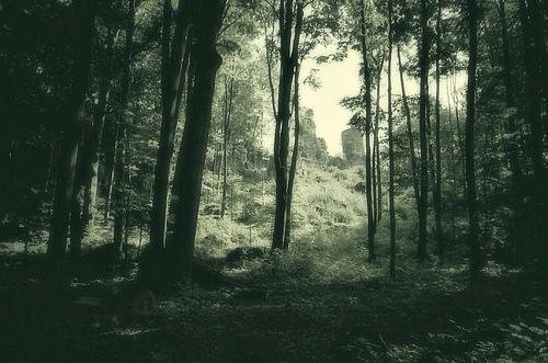 フリー画像| 自然風景| 森林/山林| 樹木の風景| モノクロ写真|