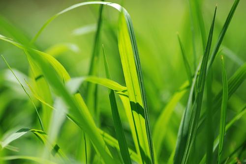 フリー画像| 植物| 葉っぱ| 緑色/グリーン| 草原の風景|