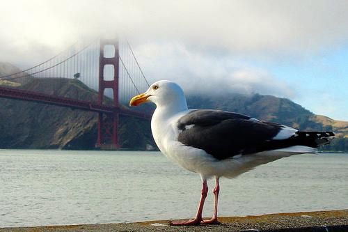 フリー画像| 動物写真| 鳥類| 野鳥| カモメ| 橋の風景|