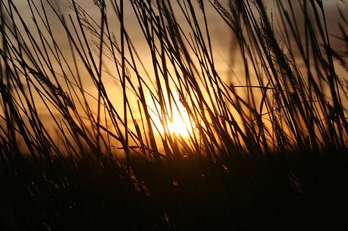 フリー画像| 自然風景| 草原の風景| 夕日/夕焼け/夕暮れ| 橙色/オレンジ|