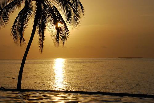 フリー画像| 自然風景| 海の風景| 水平線/地平線| 樹木の風景| 夕日/夕焼け/夕暮れ| やしの木|