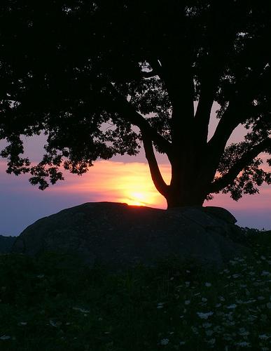 フリー画像| 自然風景| シルエット| 樹木の風景| 夕日/夕焼け/夕暮れ| アメリカ風景|