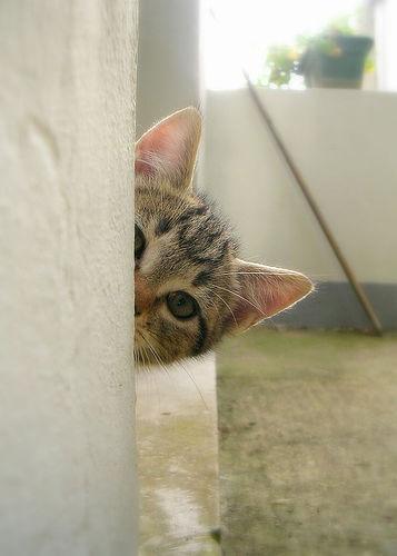 フリー画像| 動物写真| 哺乳類| ネコ科| 猫/ネコ| 子猫| 覗く/見る| キジトラ|