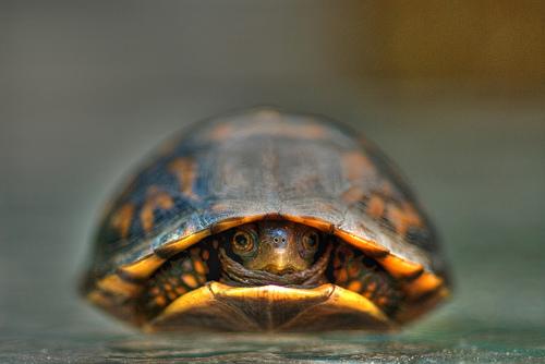 フリー画像| 動物写真| は虫類| 亀/カメ|