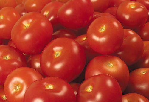 フリー画像|食べ物|野菜|トマト|赤色/レッド|フリー素材|